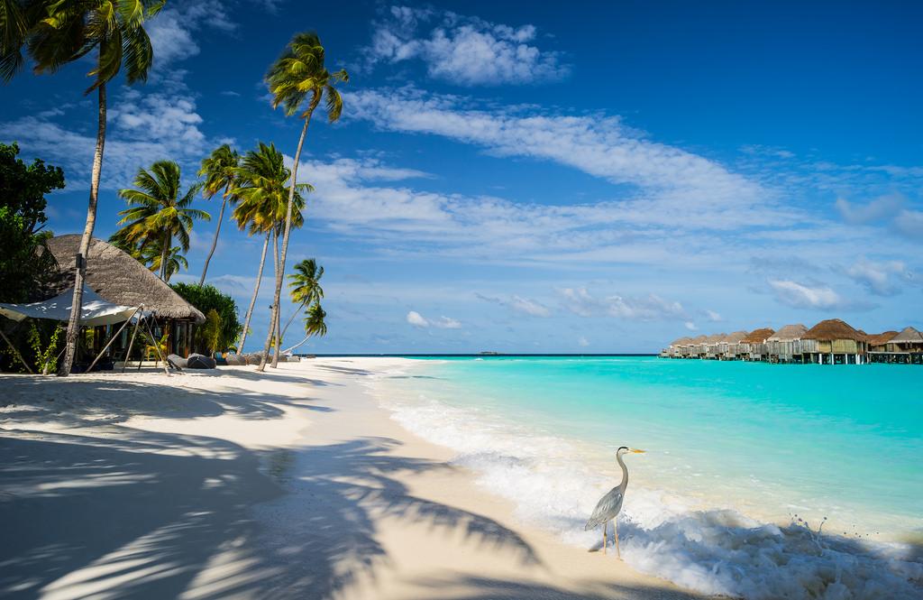 maldives billede